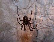 Giant Cave Spider Dwarf Fortress v0.34:Cave spid...